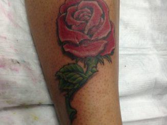 Rose over Scar