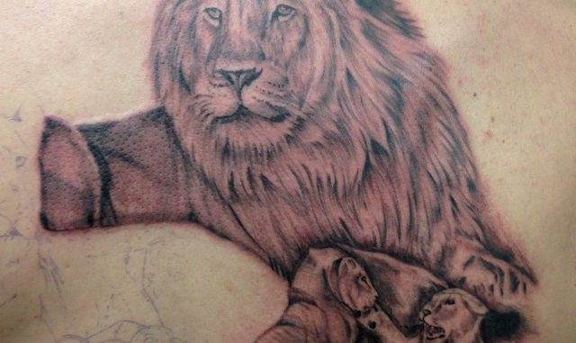 First session on lion family back